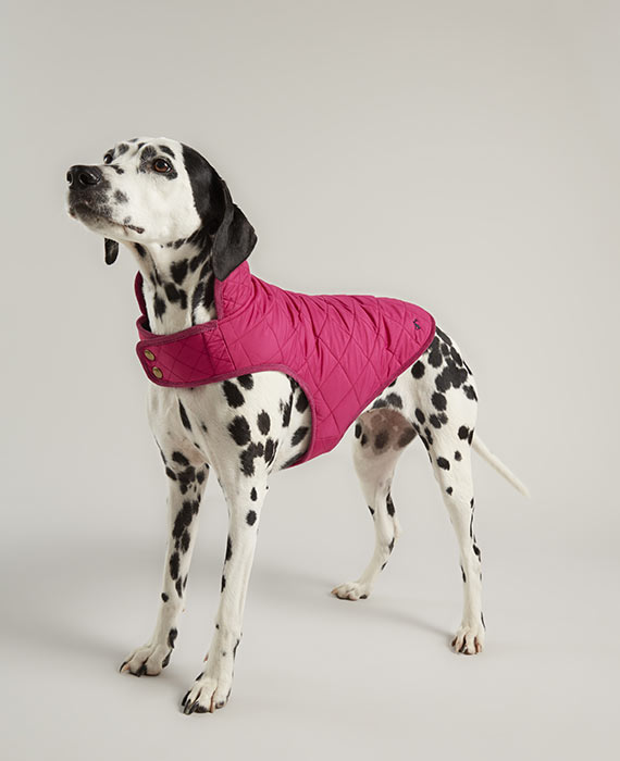 joules-pink