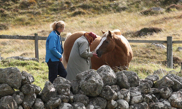 the queen feeds her horses in balmoral